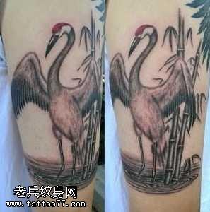 手臂丹顶鹤纹身图案