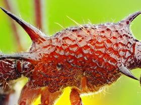 螞蟻圖片微距