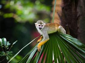 松鼠猴图片