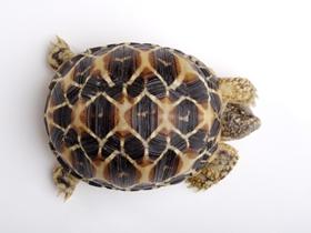 小烏龜圖片