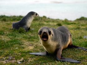 南极的海豹