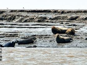 走近斑海豹