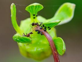 螞蟻總動員