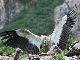 一群秃鹫的图片
