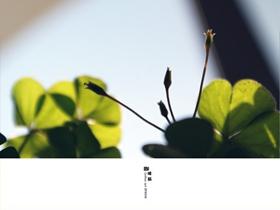 清新红花酢浆草