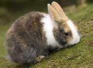 草原上可爱的小兔子