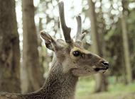 动物园长颈鹿等野生动物图片