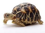 可愛小烏龜高清圖片