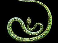 蛇的唯美千变瞬间