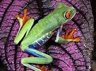 蟒蛇毒蛙野生动物高清合集