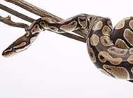 网友提供海量蛇高清图片