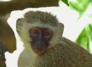 猴子图片大全 猴子的情怀