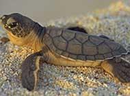慢條斯理的可愛烏龜動物壁紙