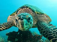 聰明的烏龜高清特寫圖片