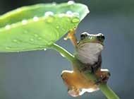 夏天的青蛙