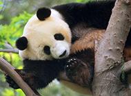 长颈鹿熊猫野生动物图片合集