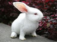 空地上吃草的萌哒哒小兔图片