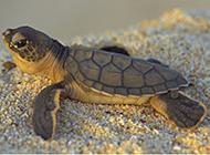 海底烏龜圖片大全