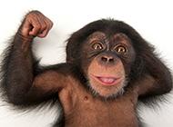 頑皮的珍貴大猩猩圖片
