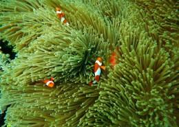 海里的珊瑚图片_11张