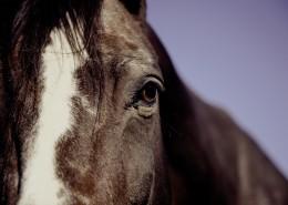 健壯的馬匹圖片_9張