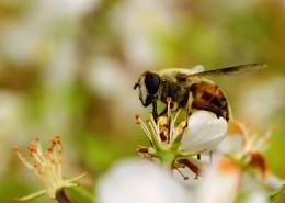 可爱的小蜜蜂图片_10张