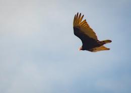 空中的飛鳥圖片_11張