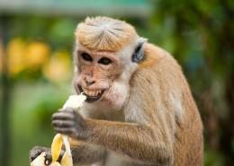 调皮可爱的猴子图片_11张
