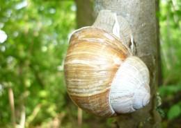蜷缩在壳里的蜗牛图片_14张