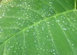 葉子上的水珠圖片_11張