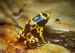 色彩鮮艷的青蛙圖片_11張