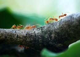 螞蟻微距攝影圖片_11張