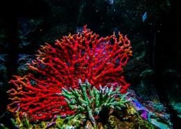 泰国曼谷海底世界图片_9张