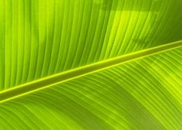 翠綠的葉子圖片_9張