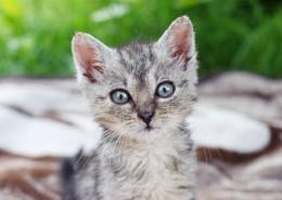 可愛灰色小貓圖片_11張