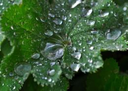 葉子上的水珠圖片_15張