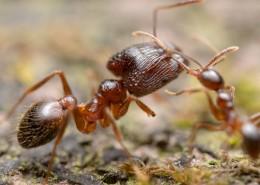 微距螞蟻圖片_10張