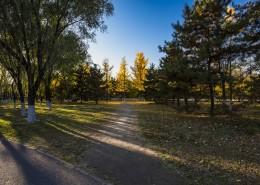 北京奥林匹克森林公园的秋天树林自