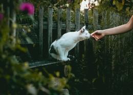 乖巧可愛的貓咪圖片_19張