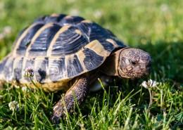 缓慢爬行的乌龟图片_15张