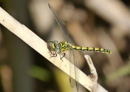 轻盈停落的蜻蜓图片_16张