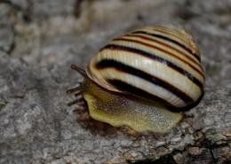 蜷缩在壳里的蜗牛图片_11张