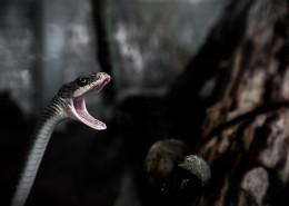 令人毛骨悚然的蛇图片_11张