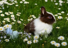 呆萌可愛的兔子圖片_10張