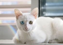 可爱白色小猫图片_14张