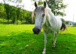 一匹英俊的白馬圖片_10張
