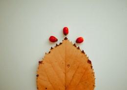 泛黃的樹葉圖片_11張