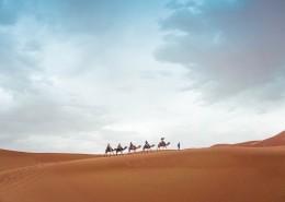 馱著人的駱駝圖片_11張