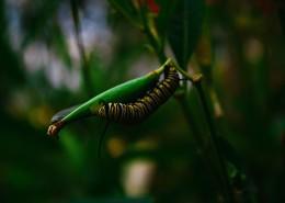 蠕動的毛毛蟲圖片_12張