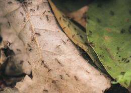 勤勞的螞蟻圖片_13張